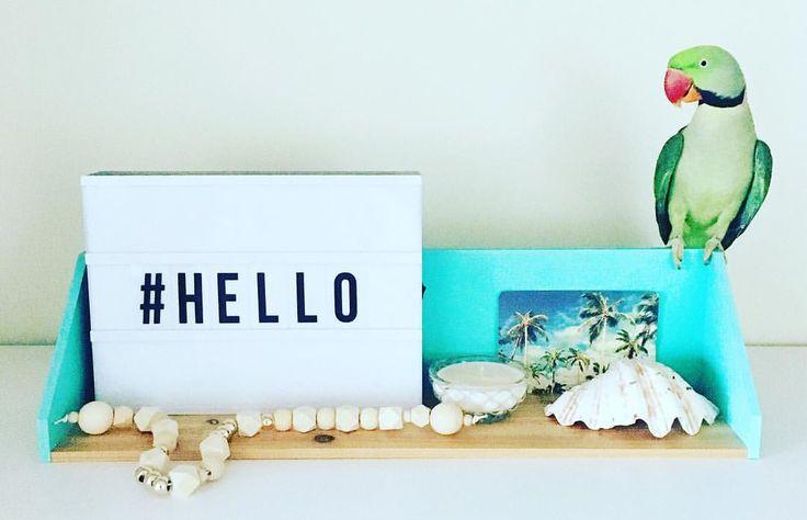 #alexandrineparrot #birds #styling #shelfstyling #homestyle #homedecor #shelfdecor