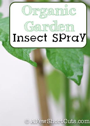 Treat those garden pest organically with this #organic #Garden Insect Spray from AFewShortCuts.com