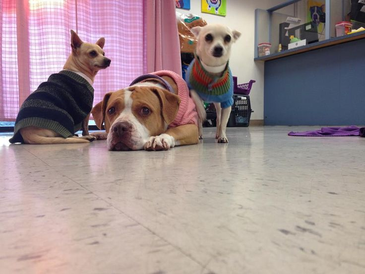 1/4/17 A special threesome in Arizona is in need of a new home where they can live together. The trio, Tiny, Teddy and Lola, were surrendered by their family (who is unable to care for them any longer) and they are now waiting for a new family at the Maricopa County Animal Care and Control agency. …