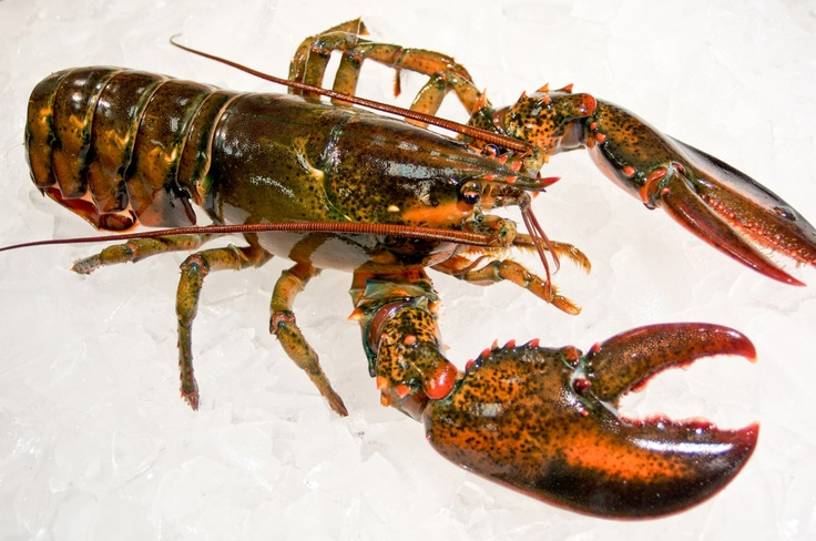 Aqua Best Fish & Seafood Market - New York City (NYC), Buy Live Lobster Online, Fresh Seafood and Fish all for home delivery