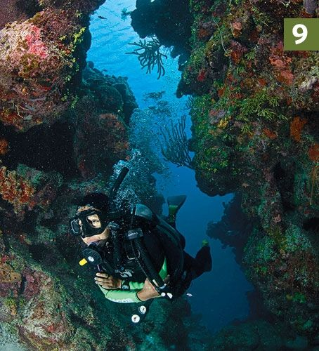 9 mary 39 s place roatan 50 best dive sites in the world diving in roatan in 2019 diving - Roatan dive sites ...