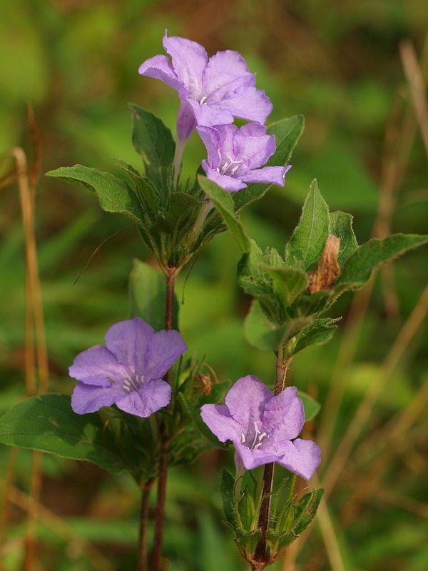 40 best alabama plants images on pinterest
