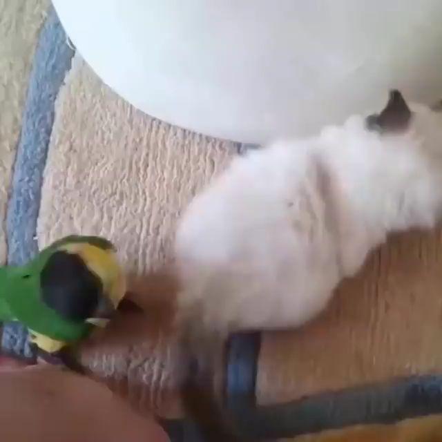 Animals & Birds Play……..