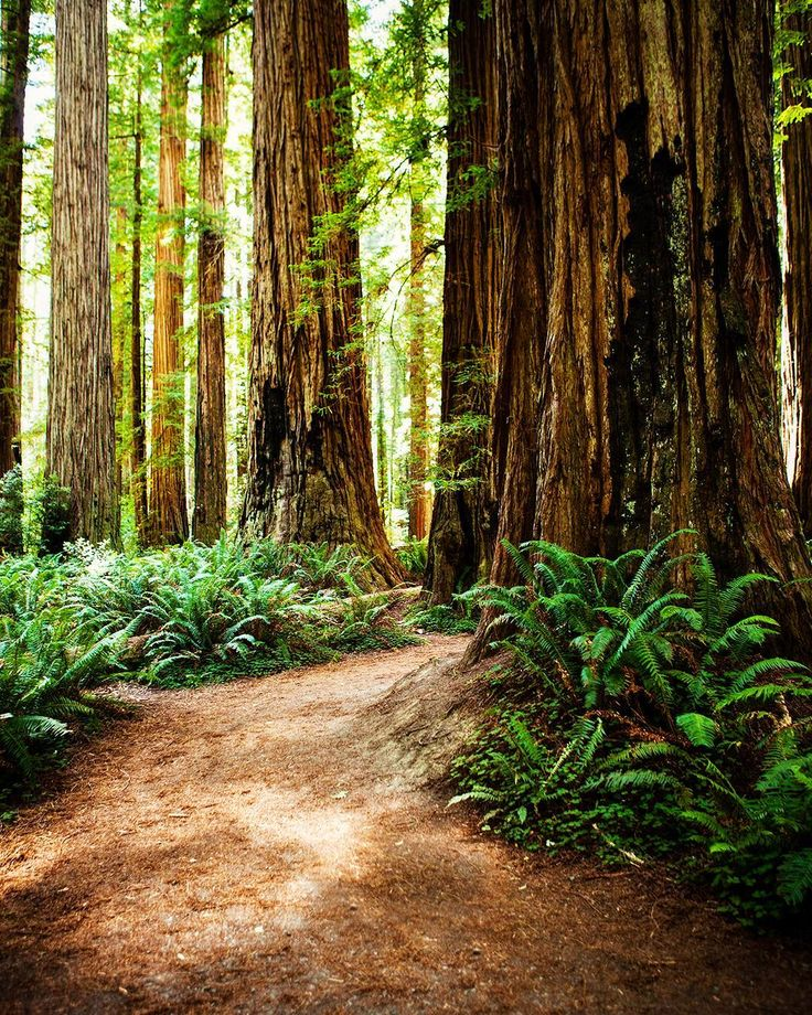 2983 best california images on pinterest california vacation