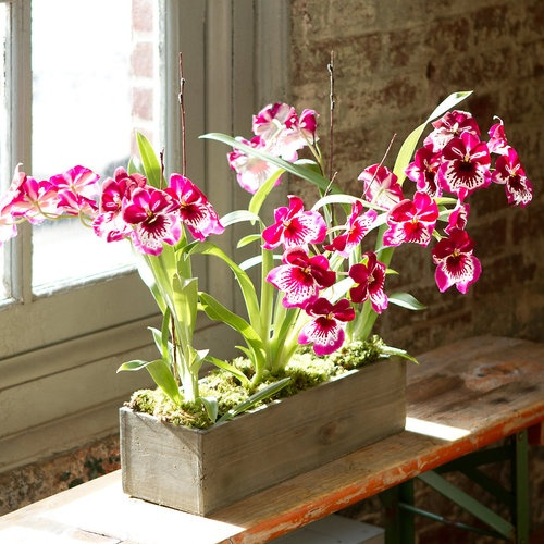 orchids sunning by the window