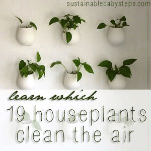 19 Houseplants Clean the Air, from sustainablebabysteps.com