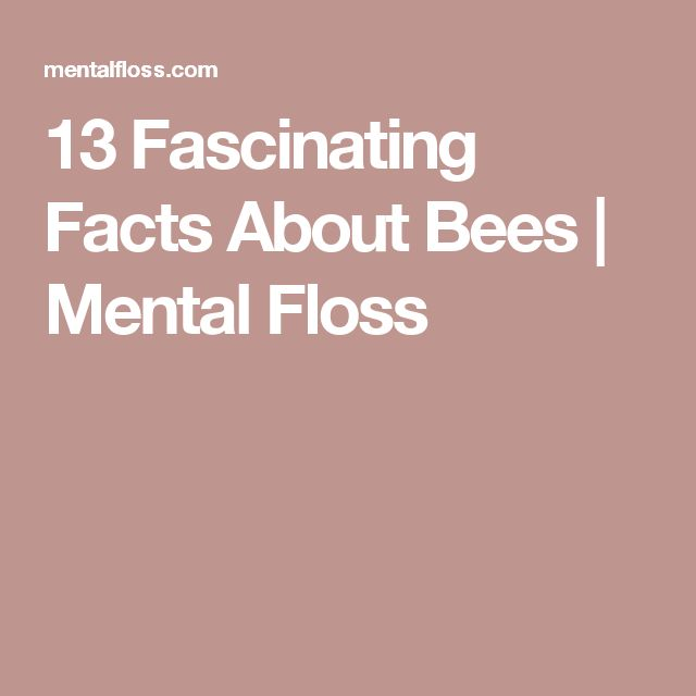 13 Fascinating Facts About Bees | Mental Floss