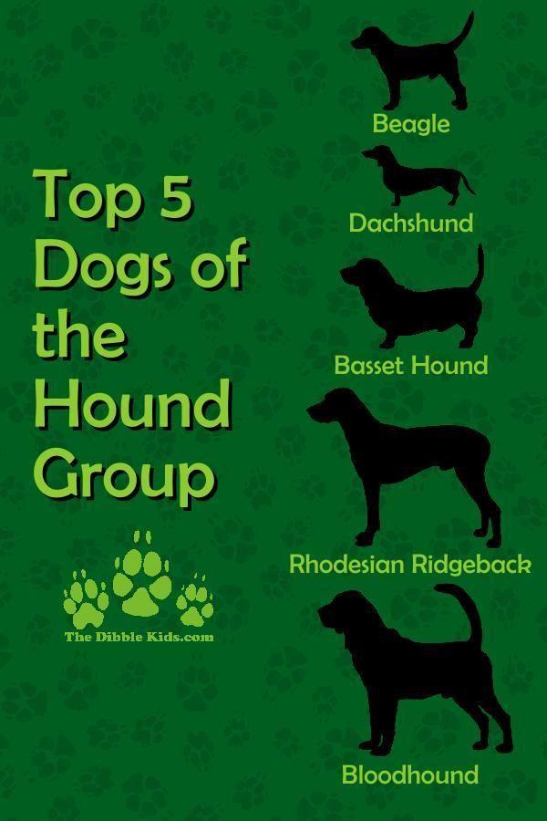 Top 5 Hound Dog Breeds Hound Dog Breeds Beagle Breeds Dog