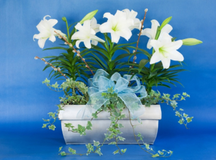 15 best easter lily board images on pinterest backyard ideas plant easter lilies and other gift plants in the garden negle Choice Image