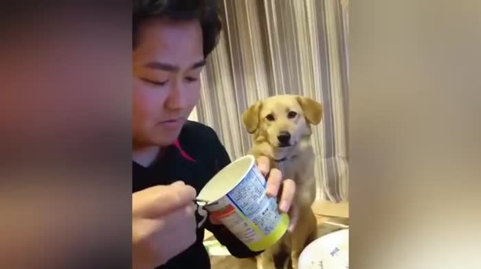 This dog wants some yogurt but its too shy to ask for it.
