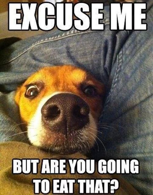 Funny dogs, funny dog quotes, funny dog pictures, dog jokes, humor dogs, hilarious dogs ...For more funny animal memes visit www.bestfunnyjokes4u.com/rofl-best-funny-joke-pic/