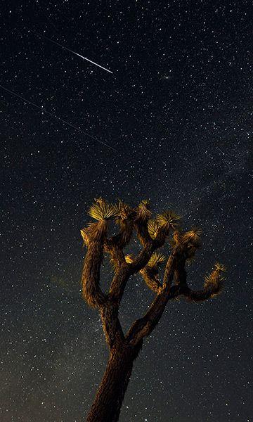 Perseids meteors: The Mojave Desert in Landers, California, USA