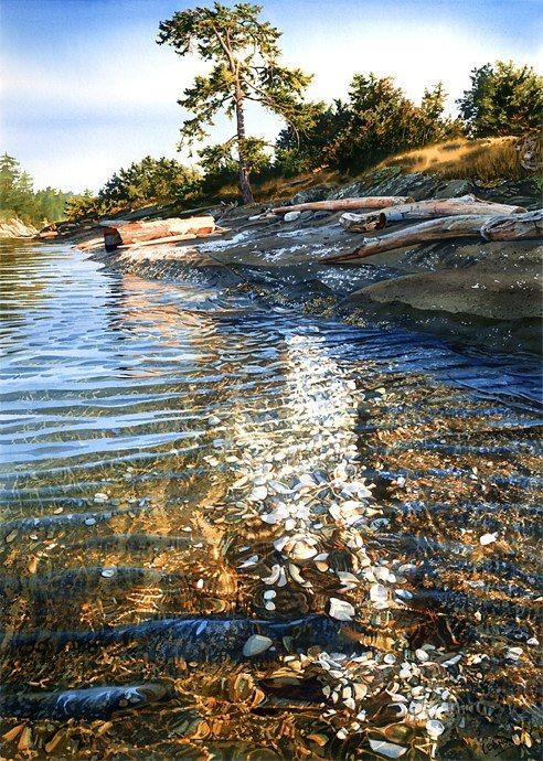 Shells In The Sunshine; watercolor by Carol Evans The clarity in these paintings is remarkable.