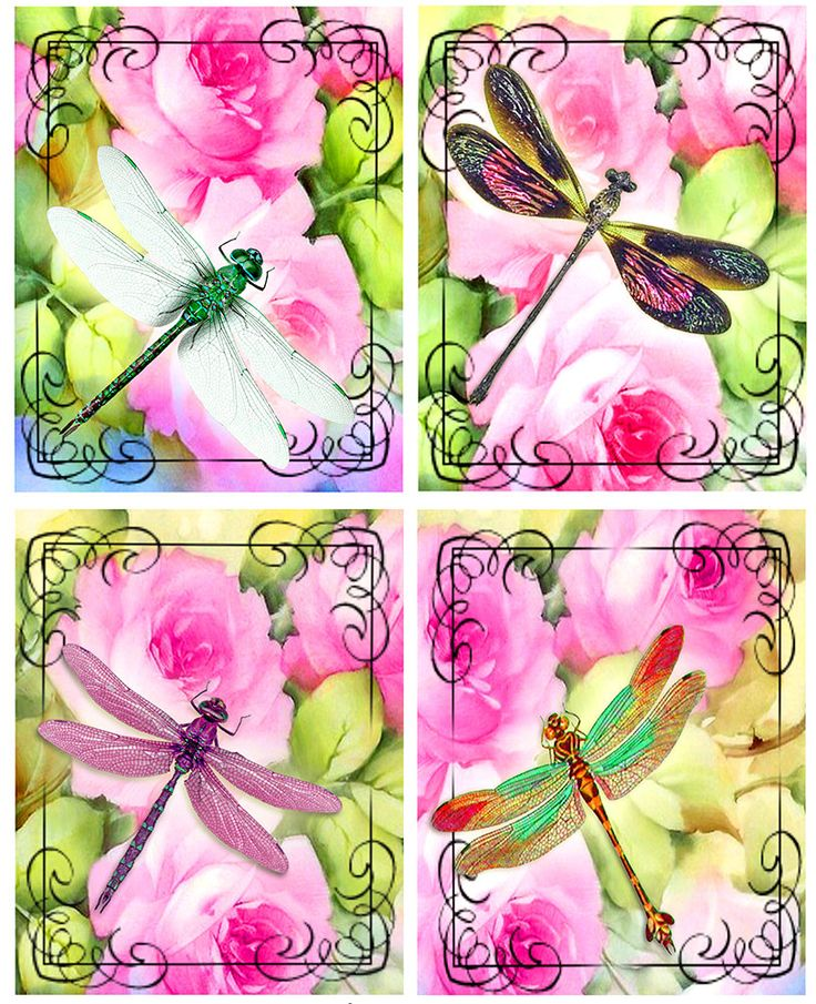 Dragonflies Collage Sheet Digital Images 4 x 5 inch
