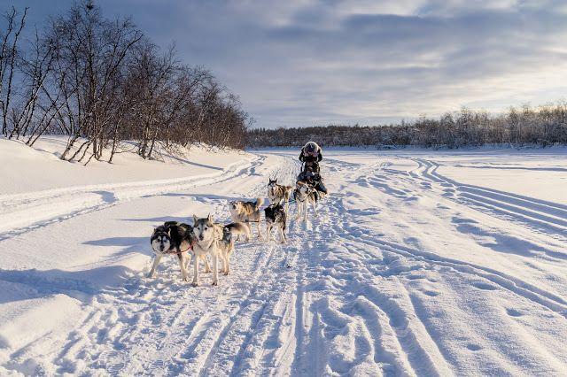 北極行 PART 1 哈士奇拉雪橇,一定要來體驗一下,真是太好玩了!HUSKY SAFARIS IN LAPLAND, SO MUCH FUN !
