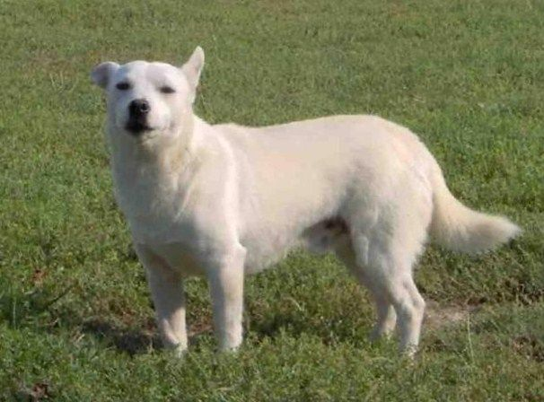 Dog Breeds That Start With 'A' Complete Breed List With