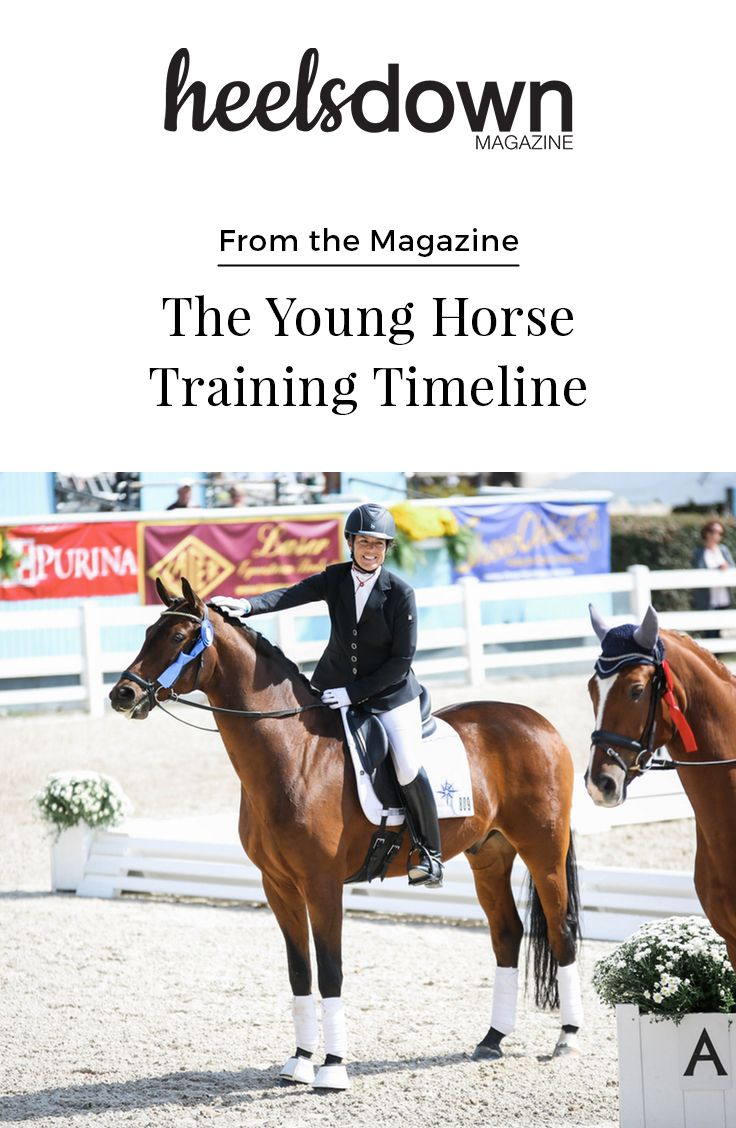 What should a young dressage prospect be working on in his three-, four-, and five-year-old years to springboard a long, successful career?