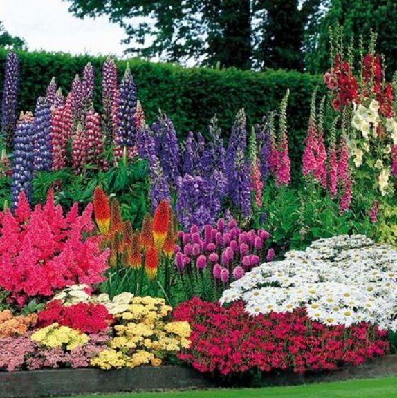 Fantastic perennial garden!