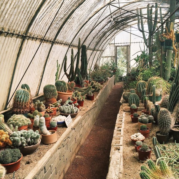 Moorten Botanical Gardens // Melody Anne Design Blog. NurseryPalm  SpringsBotanical ...