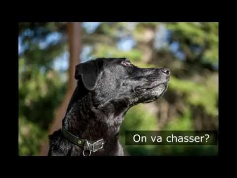 Labrador Némo aime chasser....les bâtons