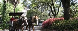 Things to do in Savannah: Check out 113 Savannah Attractions - TripAdvisor