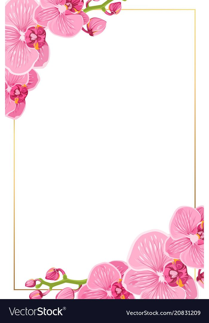 Pink Orchid Flowers Border Frame Template Card Vector Image On