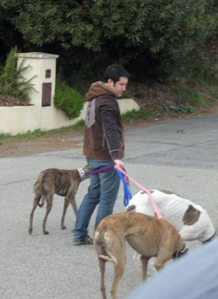 Trent Reznor and his 3 rescued greyhounds.  I think I love him more for this than his singing!