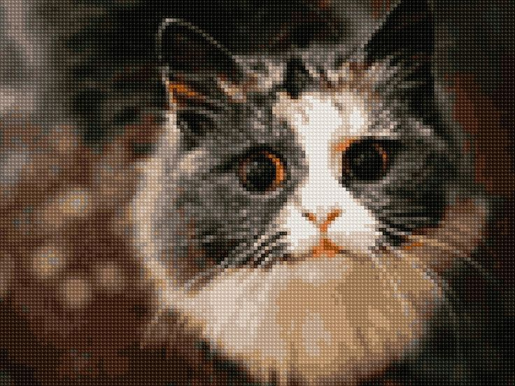 Cats Eye Cross Stitch APP