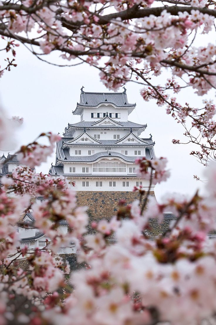 The Japans sakuras.