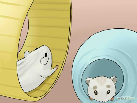 Care for Winter White Dwarf Hamsters Step 10.jpg