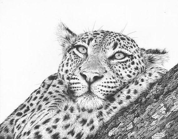 Artwork Leopard Daydreaming. Open Edition fine by DaisyClaridge