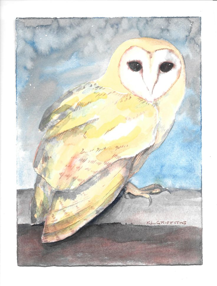Watercolour by Kirsten Griffiths. Barn owl.