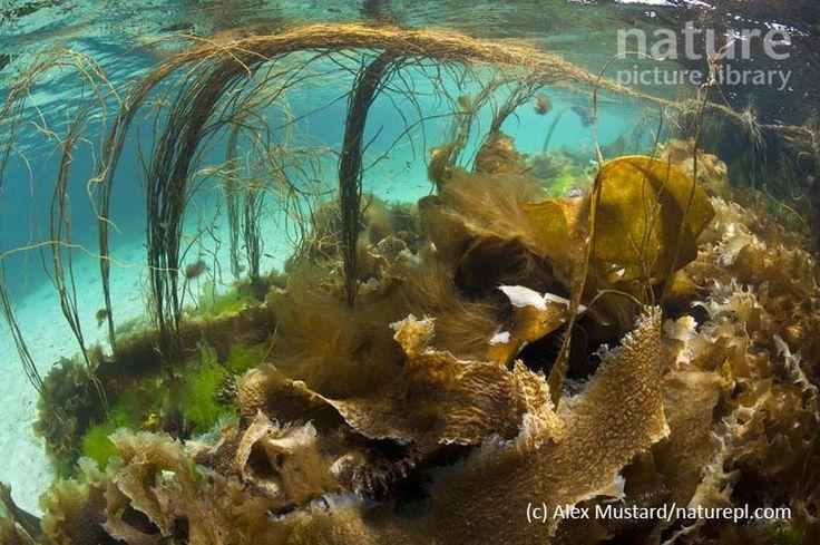 ©Alex Mustard/2020VISION/naturepl.com