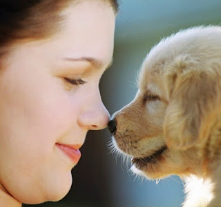 Wholesale pet supplies - Discount Pet supplies - Vet Supplies: Get a Great Deal on Discount Dog Products Online
