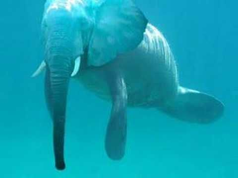 Animais Raros: Very rare animals indeed! Looks more like an Elephant crossed with a Manatee!