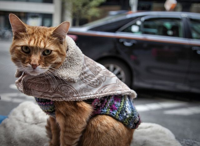 Cat of the Streets: named McLovin