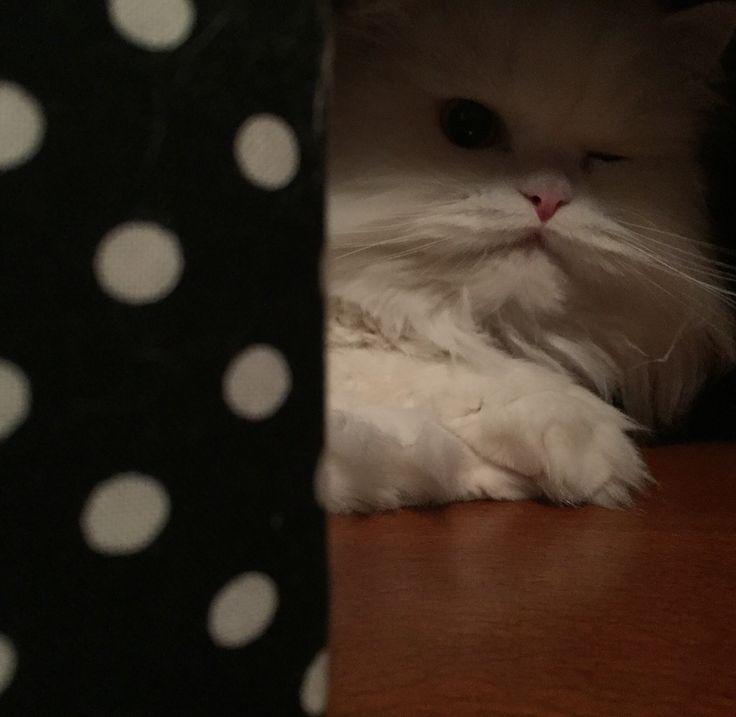 My Suzy #cat