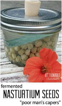 """Some people call them """"poor man's capers."""" I just call them GOOD. These spicy little nuggets are great chopped into potato salad or eaten straight out of the jar. Fermented nasturtium seeds are good for you, too, with probiotics."""