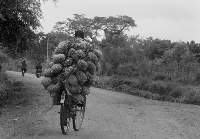 Pineapple delivery, Luwero, Uganda