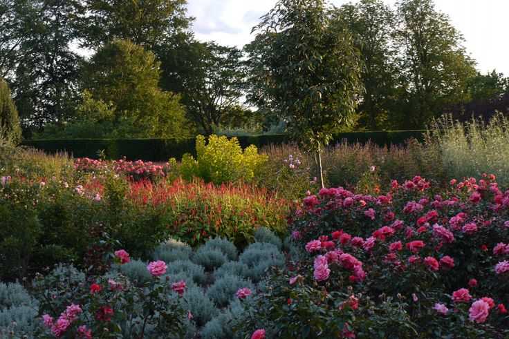 Rose Garden with mixed planting