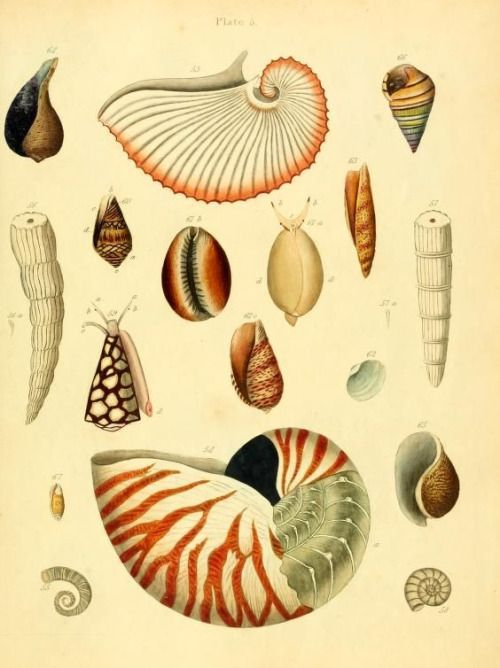 An introduction to the analysis of the sea