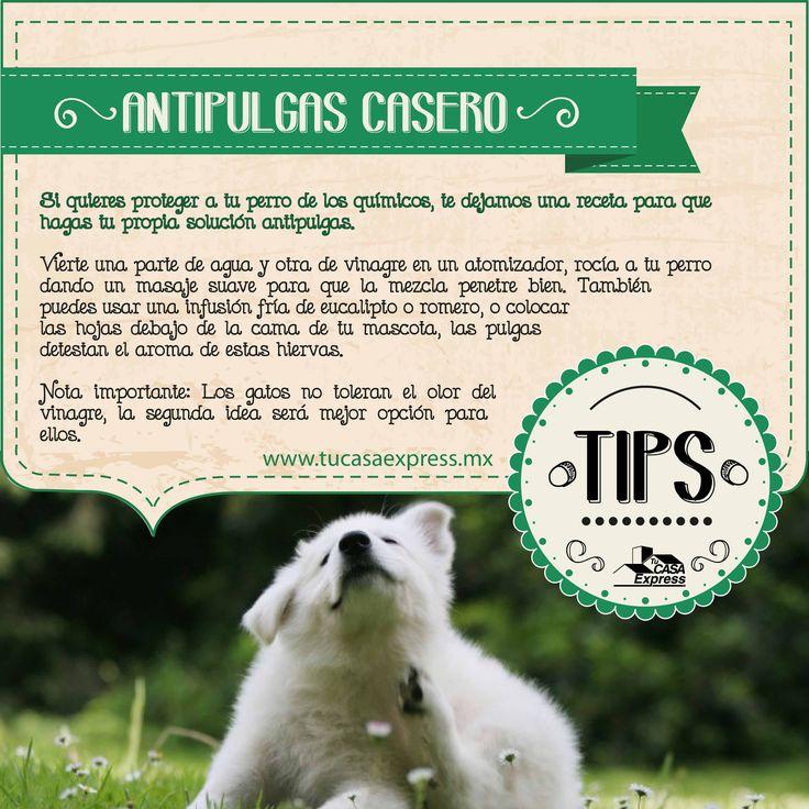 Protege a tu mascota de los químicos con esta solución casera antipulgas. Tu Casa Express #Gatos #Perros