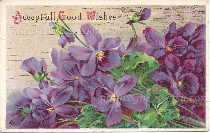 Accept All Good Wishes, 1911 Post Card, Purple Violets Antique Handwritten Correspondence by naturegirl22 on Etsy