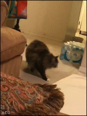 ACG • CAT GIF • Big Ninja Cat strikes again jumping over bro flying like a rocket