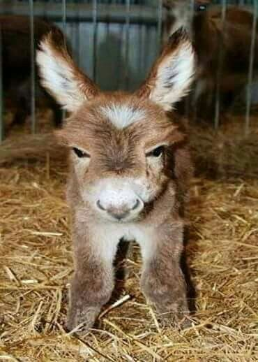Possibly the cutest little donkey anywhere!