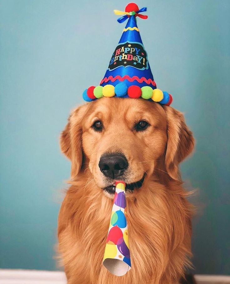 Поздравление с днем рождения фото собак