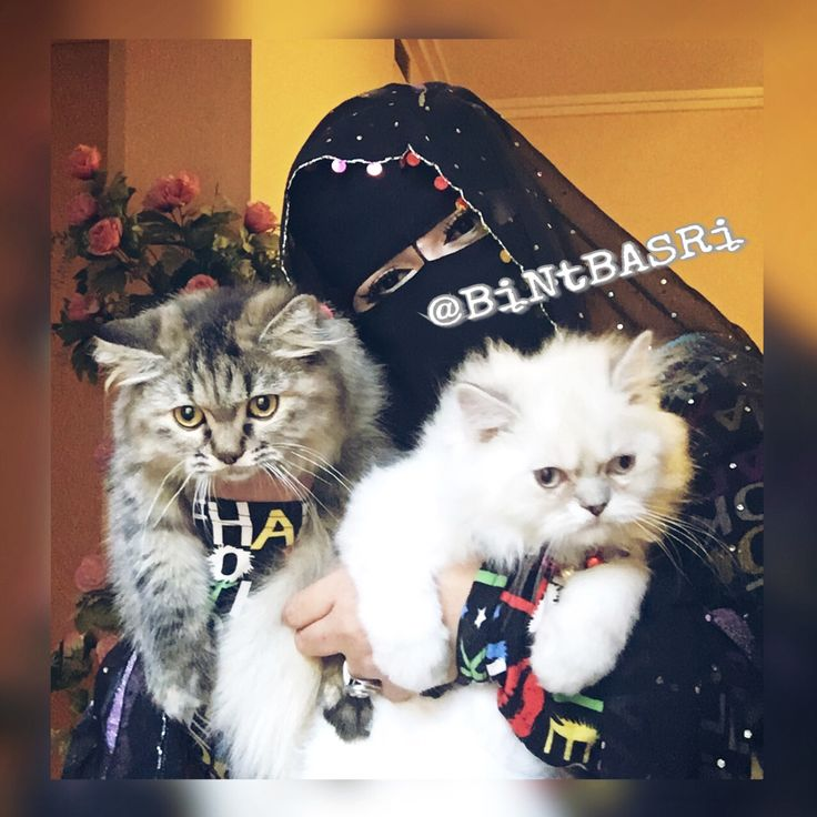 When a Muslimah chooses to cover Herself, She is choosing to gain Respect from those who understand, The Value Of Hidden Treasures.. . . #Hijab #Hijabers #Niqab #Niqabi #Abaya #Cat #Cats #MyCats #CatLover #PersianCat #HimalayanCat #WhiteCat #Kucing #KucingPersia #KucingHimalaya #Muslim #Muslimah #Islam #SelfieWithMyCats