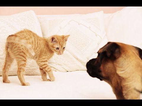 How To Introduce A Hyper Dog To A Cat