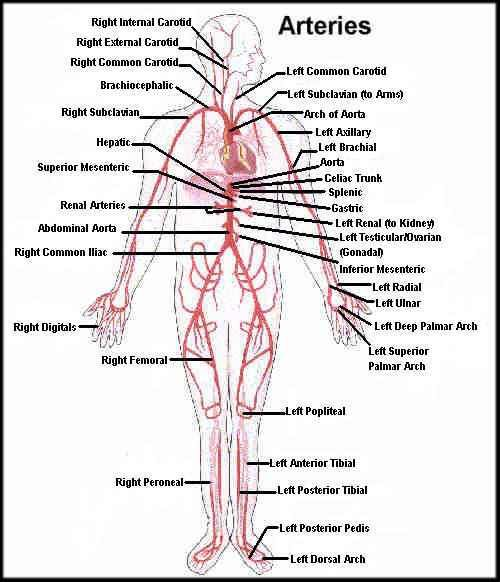 Amazing guide for CPT code for Angiogram in Surgery - Medical Coding Guide - Learn How to Code