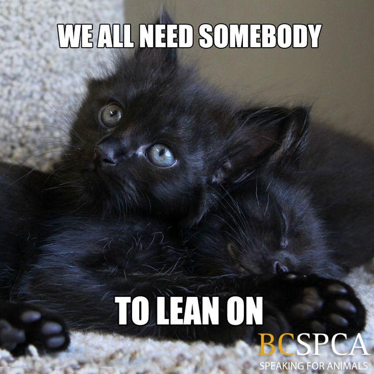 Best Katten Met Tekst Images On Pinterest Cat Behavior Cats - Adorable photos of black shelter cats help them find their forever homes